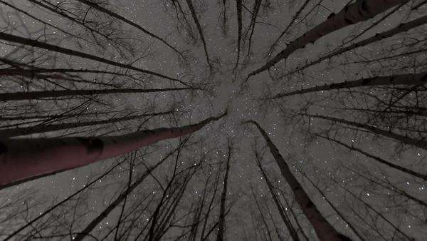 This is a timelapse shot of stars in the sky as seen through the tops of the trees. Royalty-free stock video