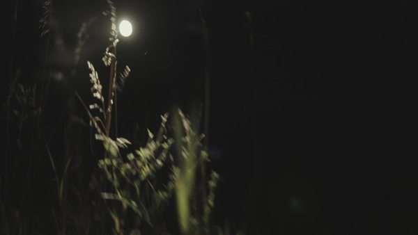 Handheld shot of a light source illuminating grass stems in the dark Royalty-free stock video