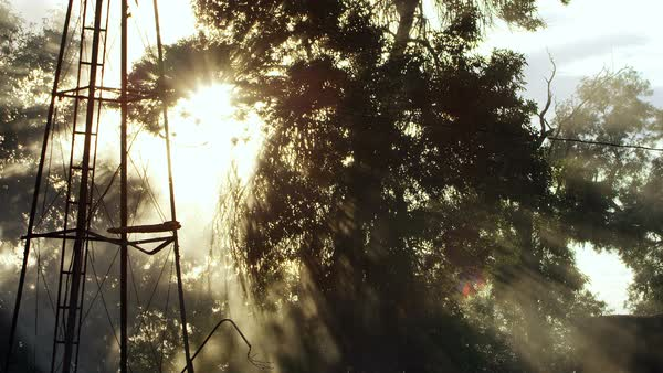 Sun shining through trees and smoke from house fire Royalty-free stock video