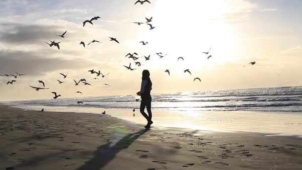 Wide shot of a woman feeding birds on the shore Royalty-free stock video