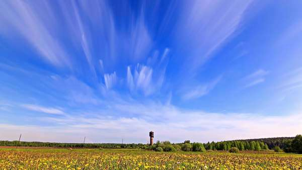 Dandelion field clouds blurred timelapse Royalty-free stock video