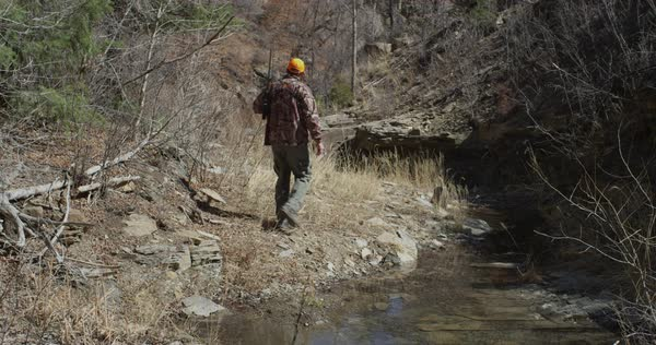 An unidentified hunter dressed in camouflage and blaze walks away from camera carrying a rifle, walking in a rocky ravine along a small creek. Royalty-free stock video