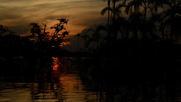 Hand-held shot of a marsh at sunset Royalty-free stock video