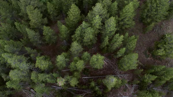 Slowly flying over tree tops looking down and passing a river. Royalty-free stock video