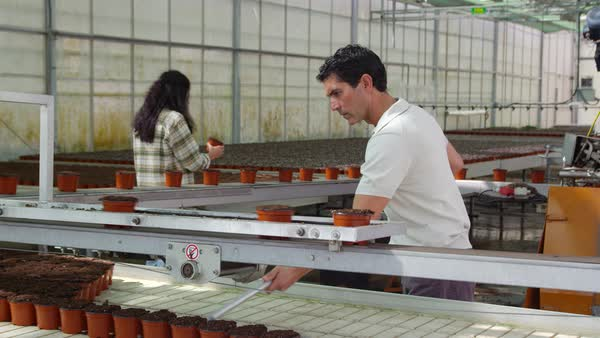 A man using multi-pronged fork for moving pots filled with soil from  conveyor belt stock footage