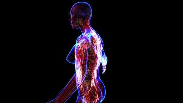 all human body systems. muscular system highlight - stock video, Muscles