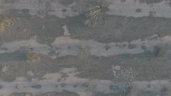 Top view of ordered dry orange tree field, flat color slog, aerial view  stock footage
