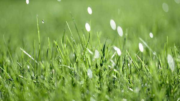 Big drops of rain falling on grass with dolly move to the right. Shallow depth of field, recorded in slow motion at 60fps with fast shutter. Royalty-free stock video