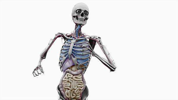 Computer animation of the male upper body running showing internal computer animation of the male upper body running showing internal organs on a white background stock video footage dissolve ccuart Choice Image