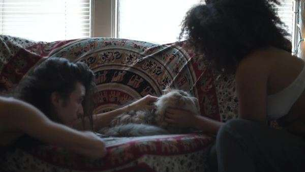 Handheld shot showing two young people caressing a fluffy cat lying on a couch Royalty-free stock video