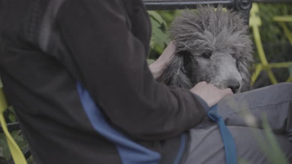 Hand-held shot of a man sitting with his dog in a park Royalty-free stock video