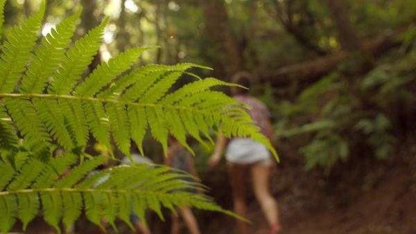 Close-up of fern leaves, blurred people pass in background Royalty-free stock video