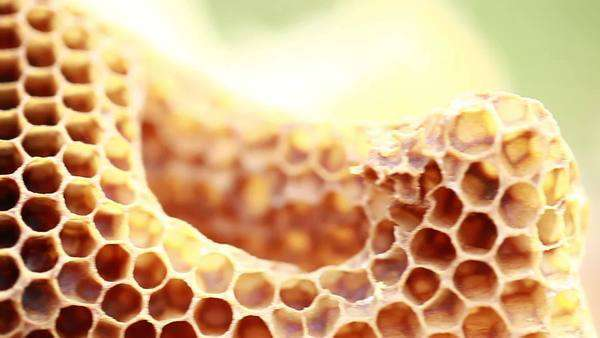 Close up shot of a honeycomb Royalty-free stock video