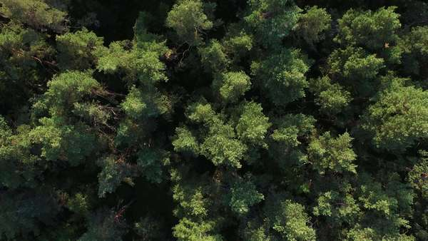 Aerial drone shot over the north european forest. Royalty-free stock video