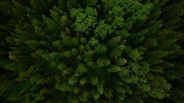Aerial shot of an evergreen forest Royalty-free stock video
