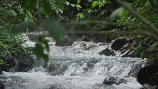 Costa Rica, Stream in forest Royalty-free stock video