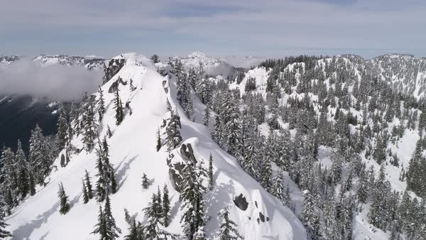 Epic Winter Wonderland Aerial of Fresh Powder Snow on Trees of Mountain Forest in Pacific Northwest Royalty-free stock video