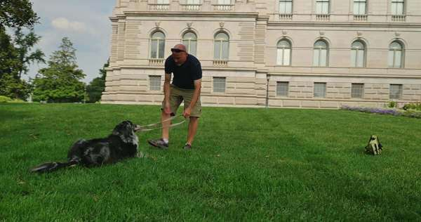 A man plays with his dog on the lawn of the Library of Congress in the Capitol Hill district of Washington, D.C. Royalty-free stock video