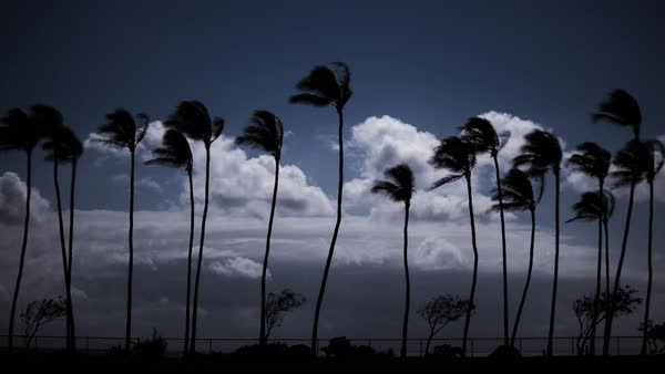 Stormy and windy palm tree timelapse on the beach.  Rights-managed stock video