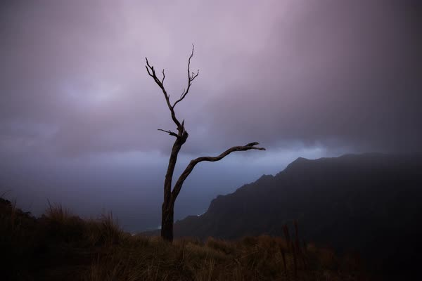 Napali Coast foggy tree timelapse. Rights-managed stock video