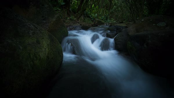 Lush Kauai creek revealing the forest. Motion controlled timelapse. Rights-managed stock video