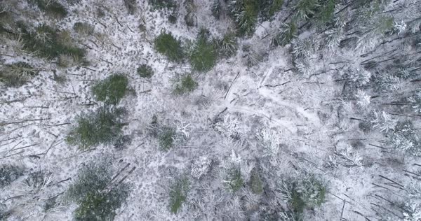 Straight down aerial over snowy forest. Royalty-free stock video