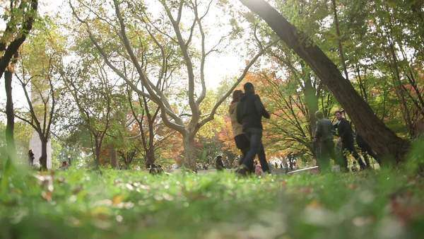 Brooklyn, New York City: Groups of young adults stroll around a lively city park on a sunny autumn day Royalty-free stock video