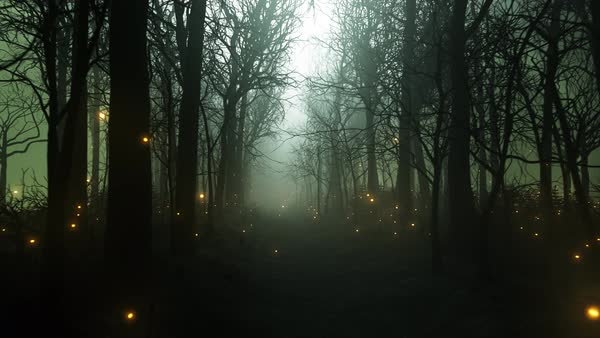 Seamless Looping Animation Of Fireflies In The Dark Forest