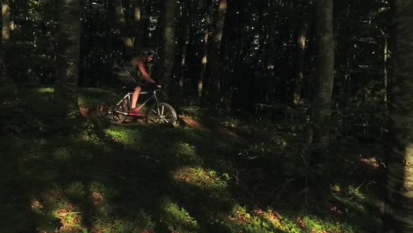 Wide shot of two cyclists passing dark dense forest Royalty-free stock video