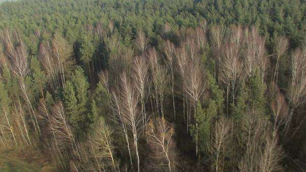Winter forest with bare and green trees, aerial footage filmed from a hot air balloon. Royalty-free stock video
