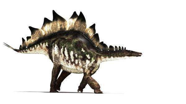 Stegosaurus dinosaur animation.  Royalty-free stock video