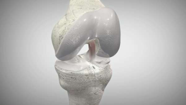 Flexing knee joint.  Royalty-free stock video