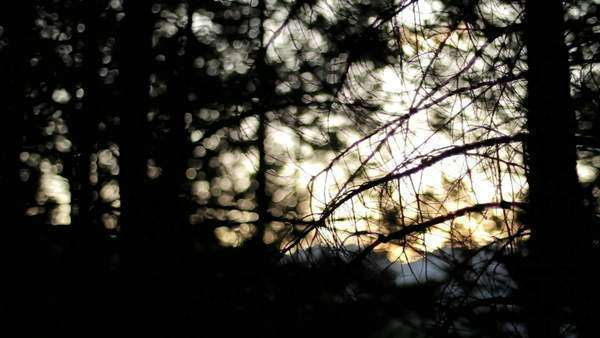 A view of the sun setting behind the mountains as seen through the branches of the forest Royalty-free stock video