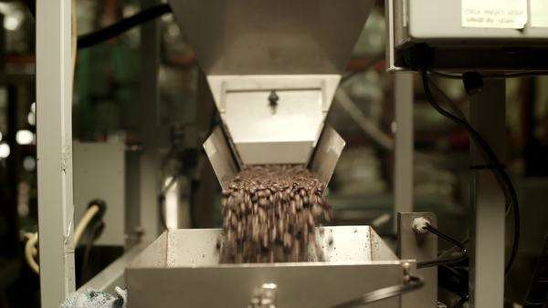 Coffee beans emptying into metal bin in factory Royalty-free stock video