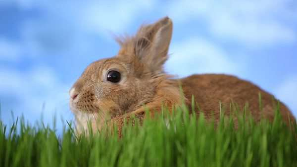 Rabbit sitting in grass Royalty-free stock video
