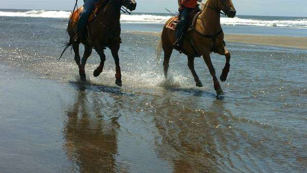Couple riding horses on beach, slow motion Royalty-free stock video