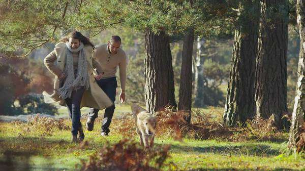 Attractive young couple are exercising their dog and running through a sunlit forest on a cool bright autumn morning. In slow motion. Royalty-free stock video