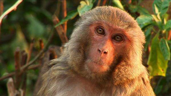 Close-up of monkey Royalty-free stock video