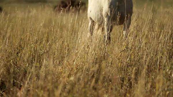Low shot of a single horse, a second horse approaches and nuzzles Royalty-free stock video