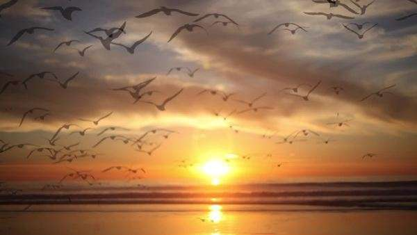 Birds flying towards horizon at sunrise over water Royalty-free stock video