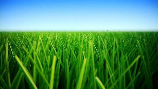 Green grass on a sunny day Royalty-free stock video