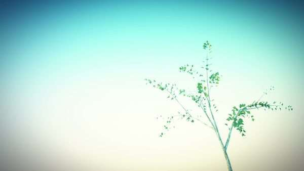 Lonely tree is growing close to camera and moving in the wind Royalty-free stock video