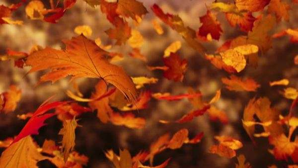 Close-up on falling autumn leaves Royalty-free stock video
