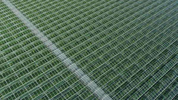 Aerial view environmentally friendly industrial agricultural greenhouses, Vancouver, BC, Canada Royalty-free stock video