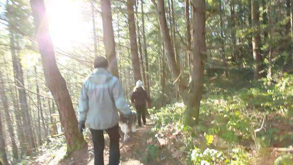 Caucasian women walking down hiking trail in woods Royalty-free stock video
