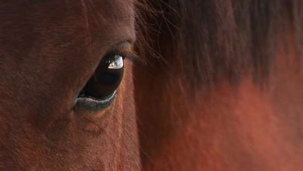 A horse blinks its eye. Royalty-free stock video
