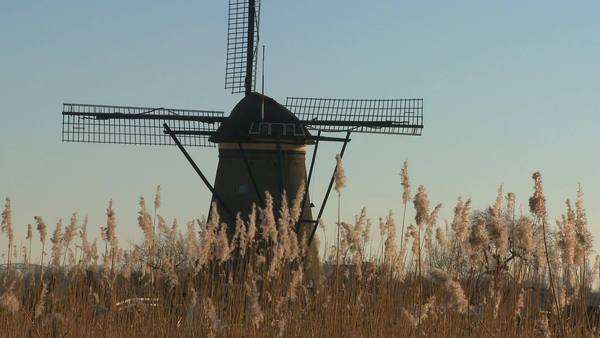 A windmill rises behind tall grass in Holland. Royalty-free stock video