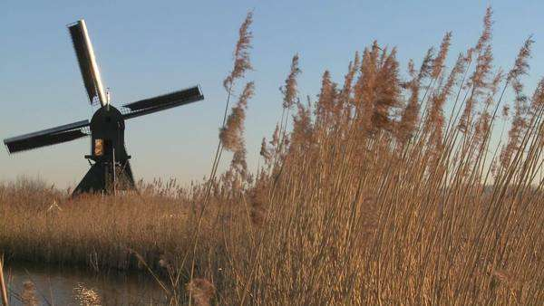A windmill spins near high grasses in Holland. Royalty-free stock video
