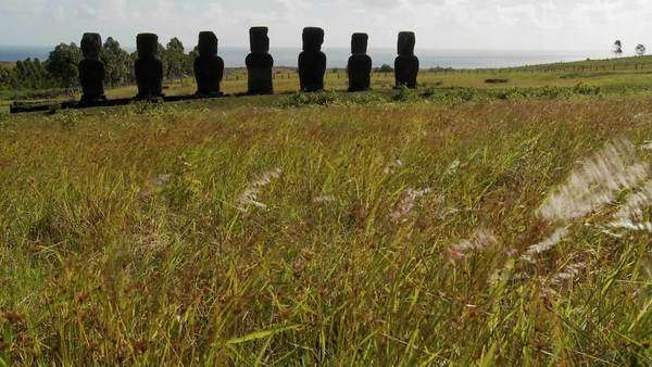 Grass blows in front of the Easter Island statues. Royalty-free stock video