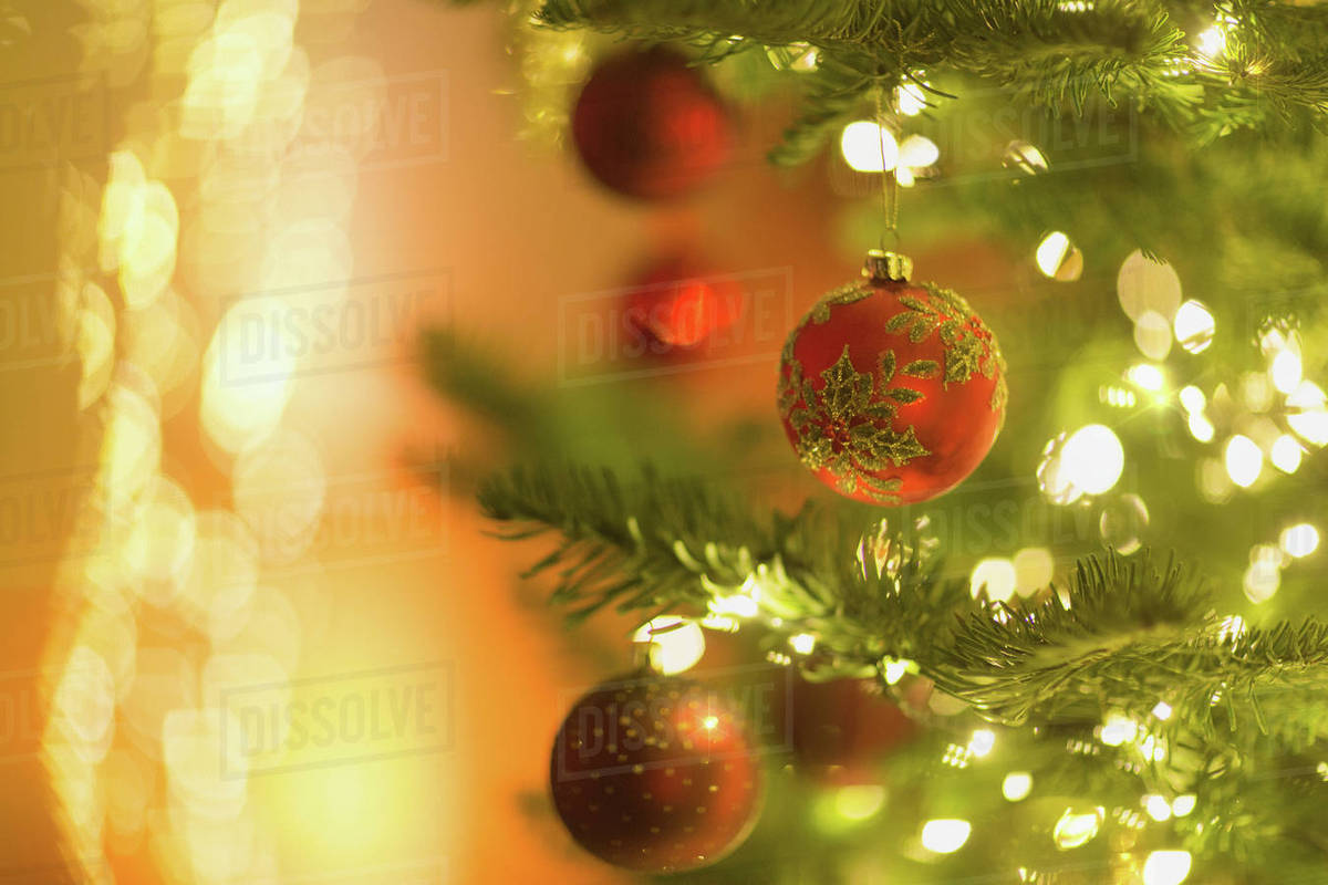 Red Ornaments Hanging From Branch Of Christmas Tree With String Lights Stock Photo